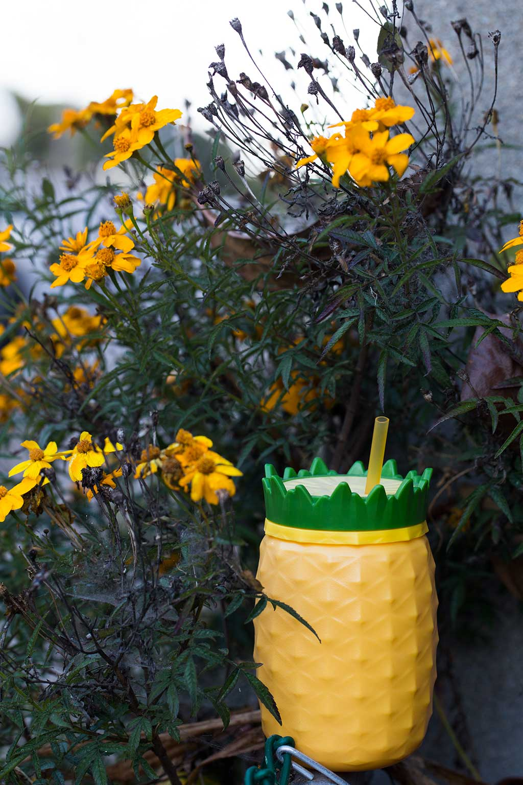 drive-swim-fly-california-pineapple-collection-daisies-pineapple-cup-dusk
