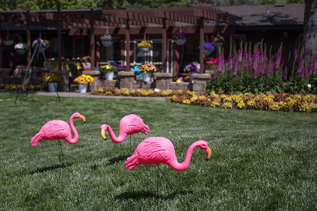 drive-swim-fly-california-spring-trials-gilroy-flamingos