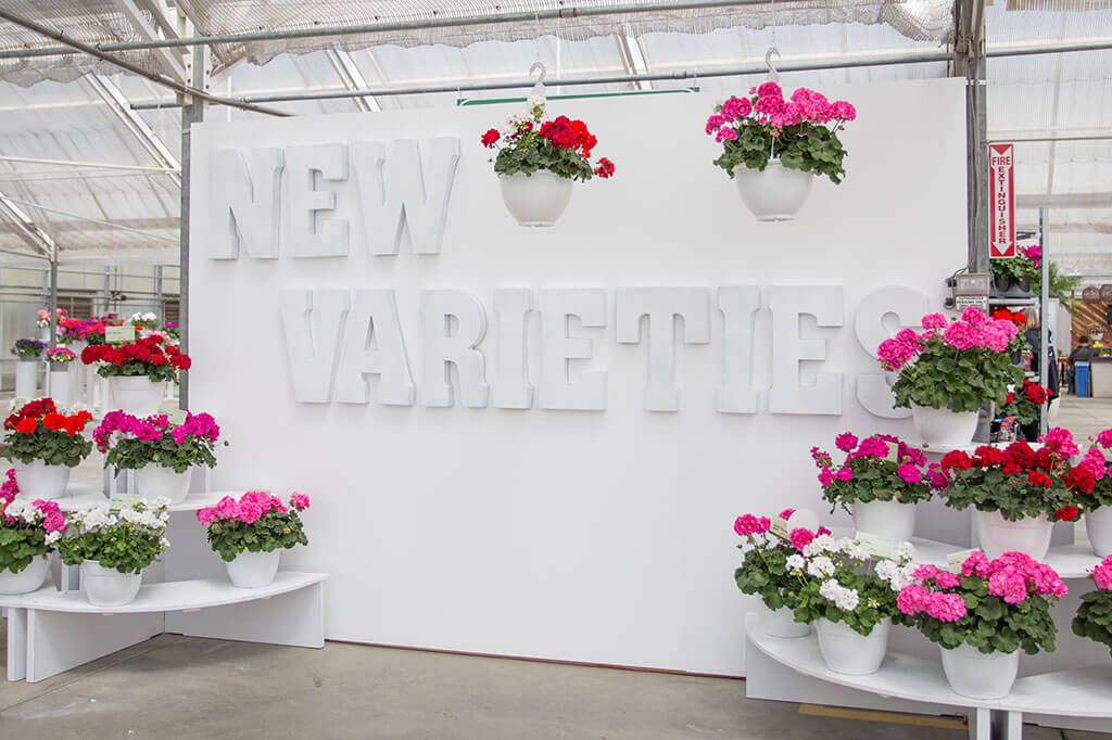 drive-swim-fly-california-spring-trials-gilroy-new-varieties-white-wall