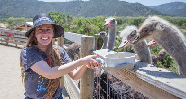 drive-swim-fly-solvang-california-ostrich-land-jessica-feeding-ostriches