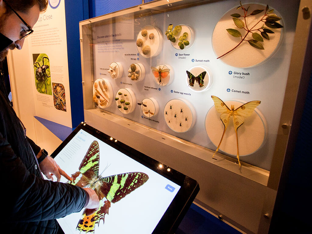 drive-swim-fly-california-academy-of-sciences-san-francisco-nitelife-adult-museum-night-butterflies-life-cycle