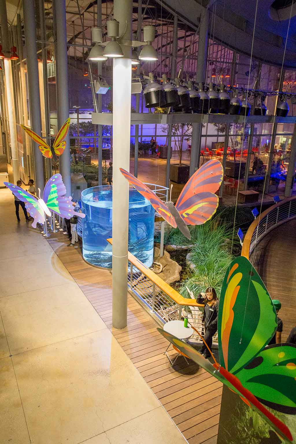 drive-swim-fly-california-academy-of-sciences-san-francisco-nitelife-adult-museum-night-butterflies