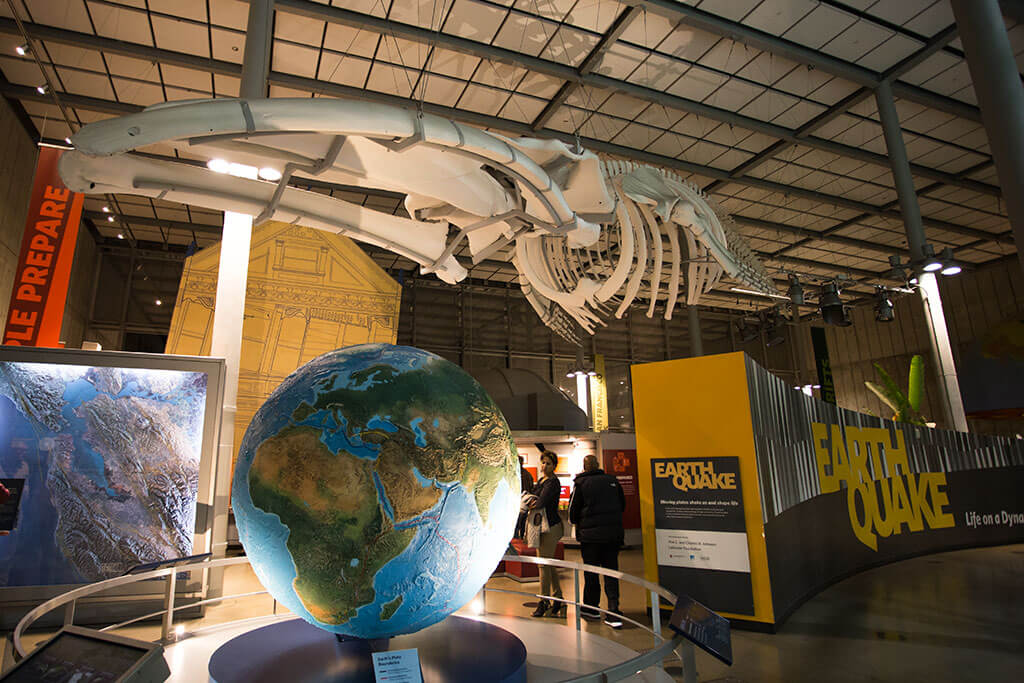 drive-swim-fly-california-academy-of-sciences-san-francisco-nitelife-adult-museum-night-earthquake-exhibit-whale-skeleton
