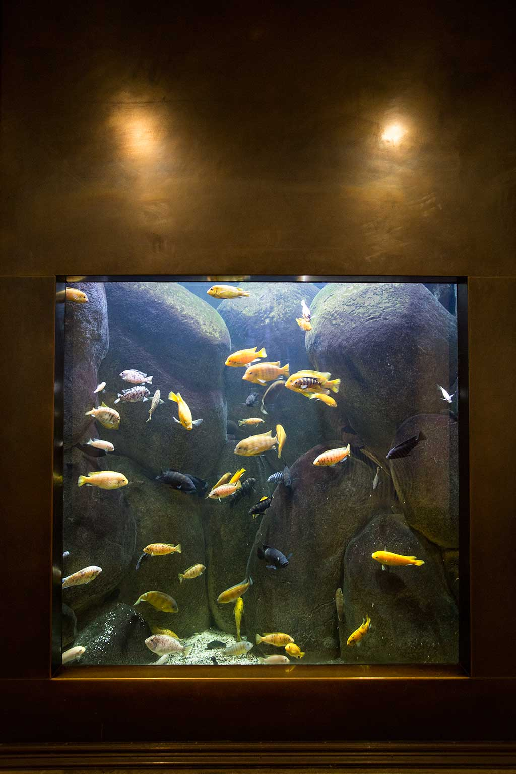 drive-swim-fly-california-academy-of-sciences-san-francisco-nitelife-adult-museum-night-fish-aquarium