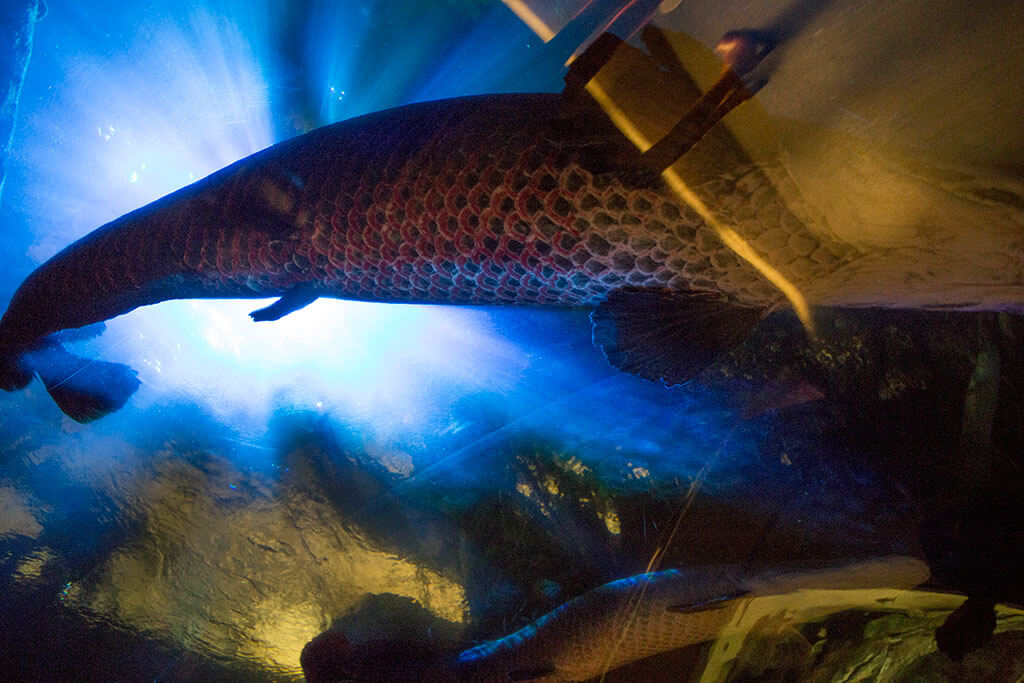 drive-swim-fly-california-academy-of-sciences-san-francisco-nitelife-adult-museum-night-fish-underbelly