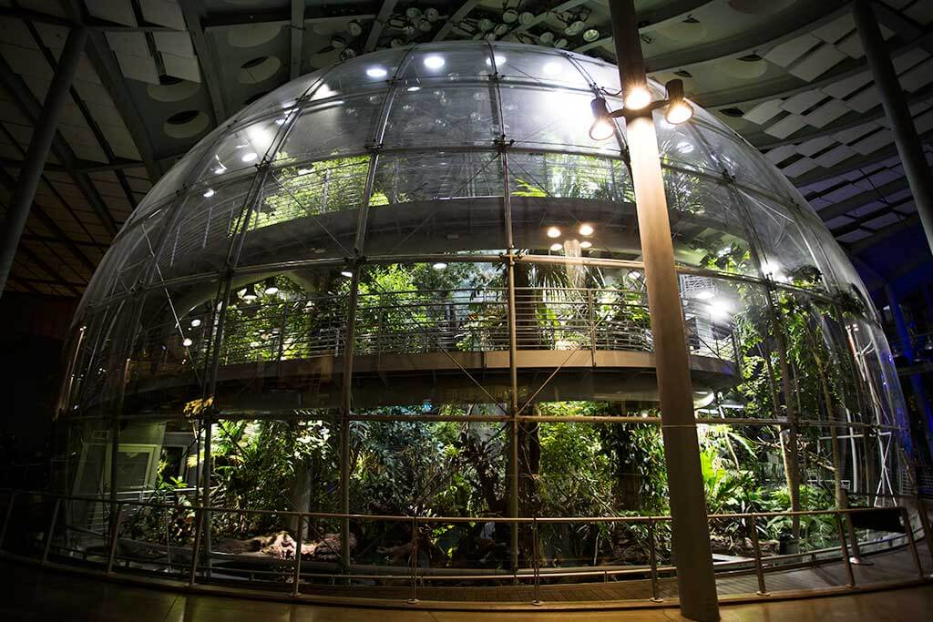 drive-swim-fly-california-academy-of-sciences-san-francisco-nitelife-adult-museum-night-osher-rainforest