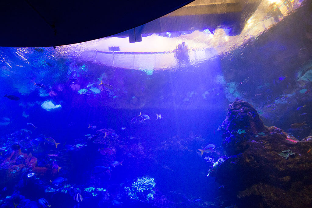 drive-swim-fly-california-academy-of-sciences-san-francisco-nitelife-adult-museum-night-steinhart-aquarium