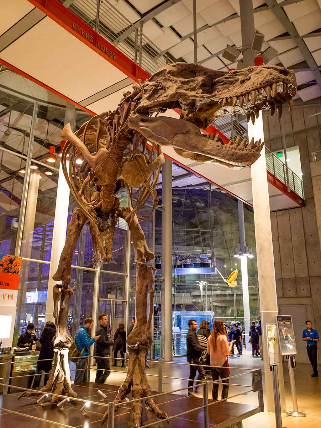 drive-swim-fly-california-academy-of-sciences-san-francisco-nitelife-adult-museum-night-t-rex-skeleton