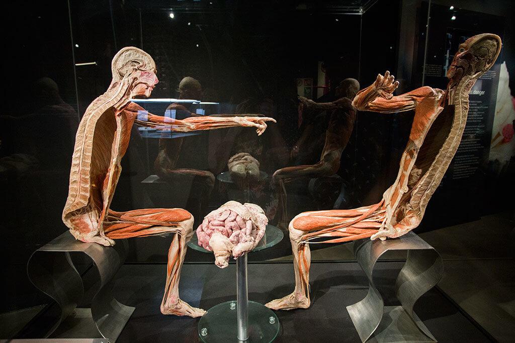 drive-swim-fly-the-netherlands-amsterdam-body-world-happiness-museum-corpse-cadaver-half
