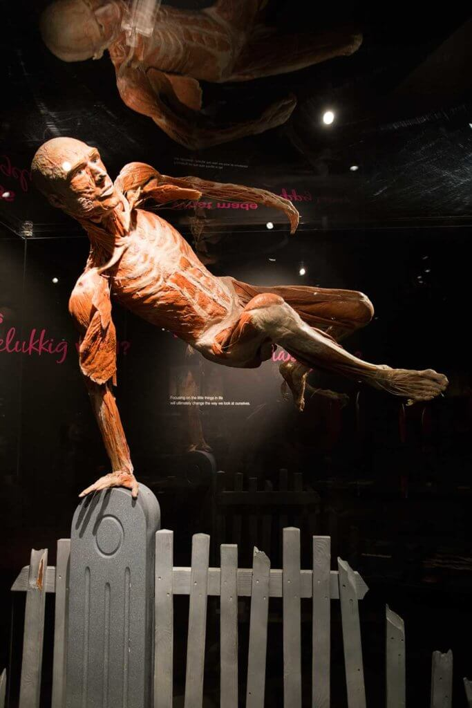 drive-swim-fly-the-netherlands-amsterdam-body-world-happiness-museum-corpse-cadaver-human-jumping-fence