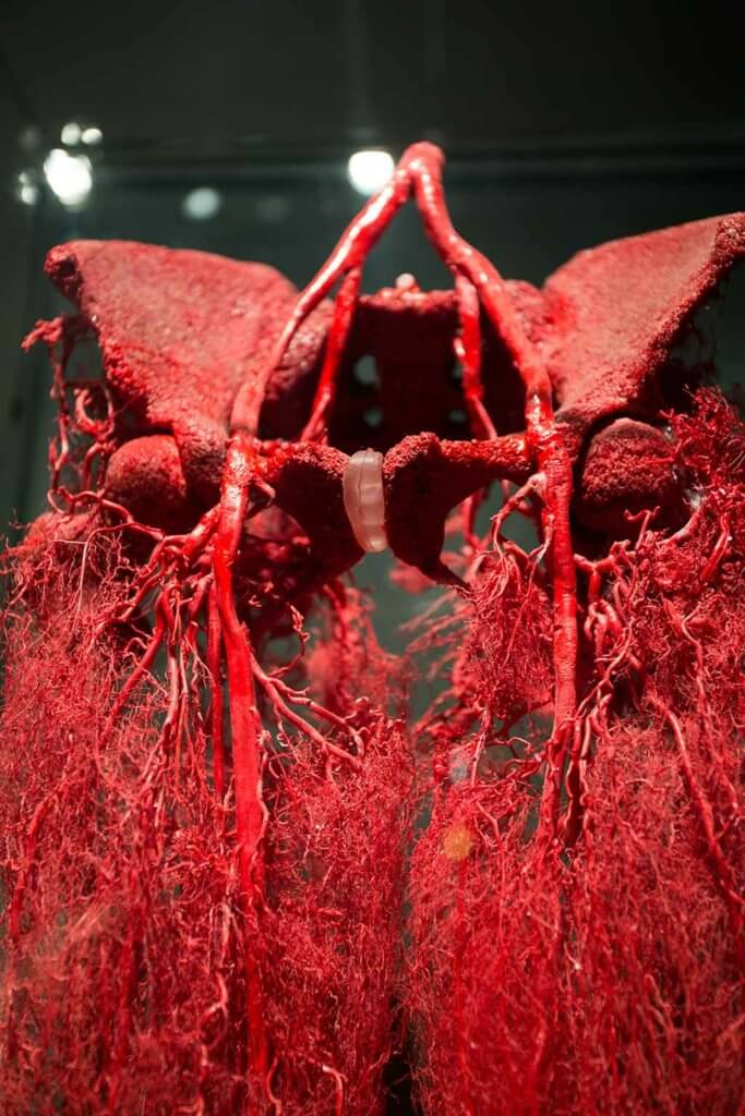 drive-swim-fly-the-netherlands-amsterdam-body-world-happiness-museum-corpse-cadaver-human-lungs-veins-capillaries-blood