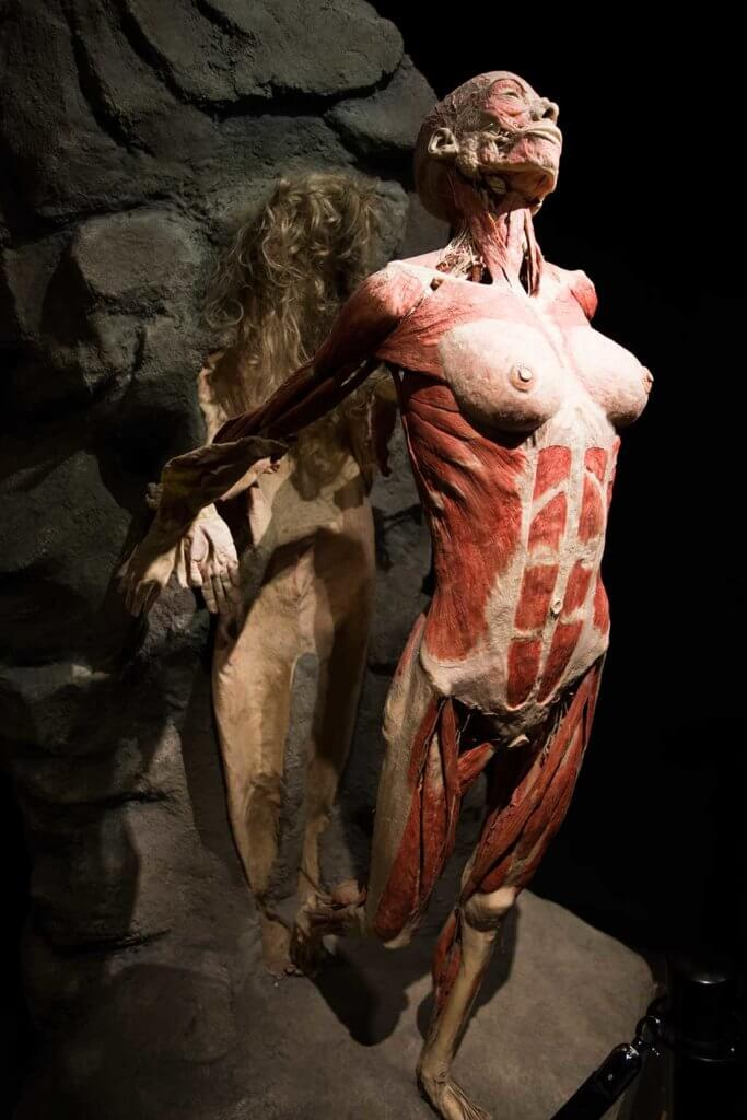 drive-swim-fly-the-netherlands-amsterdam-body-world-happiness-museum-corpse-cadaver-woman-flying