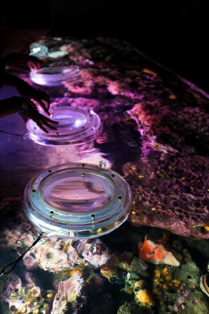 drive-swim-fly-monterey-bay-aquarium-california-monterey-peninsula-coral-viewing-magnifiers