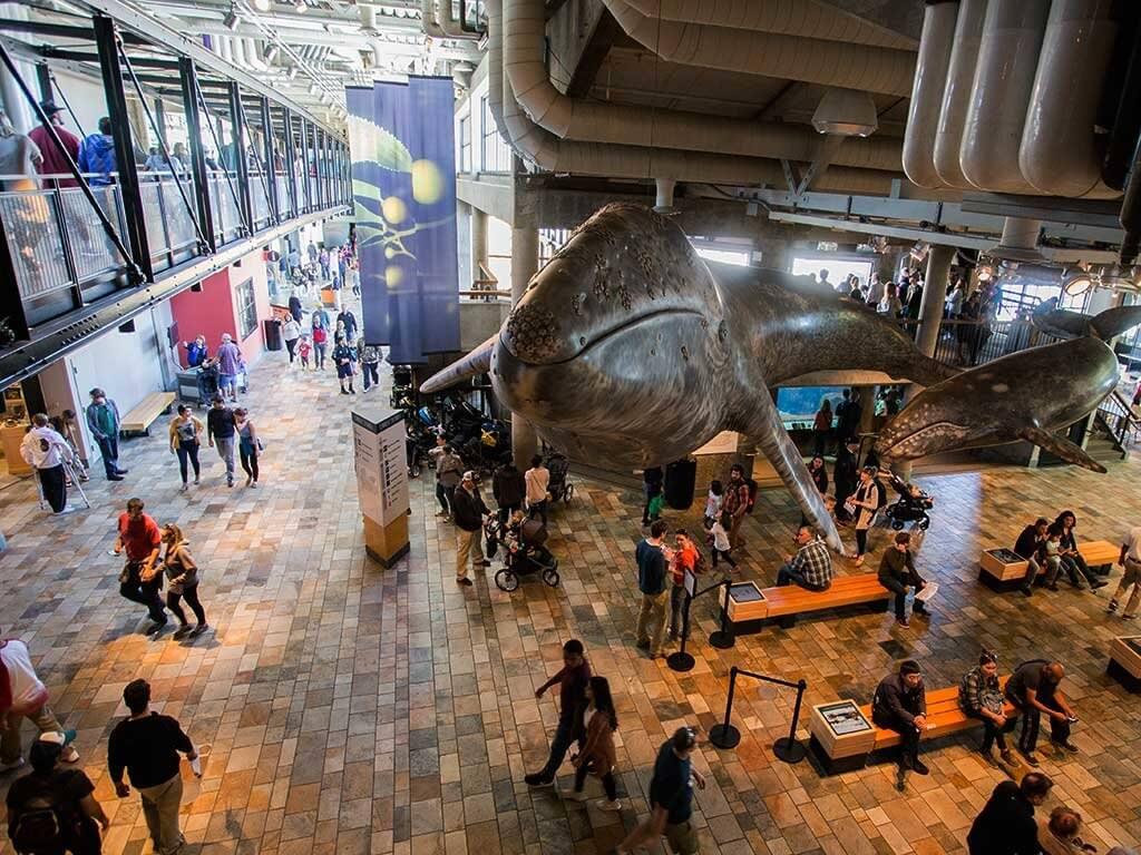 drive-swim-fly-monterey-bay-aquarium-california-monterey-peninsula-main-lobby