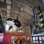 drive-swim-fly-monterey-bay-aquarium-california-monterey-peninsula-orca-whales-gift-shop