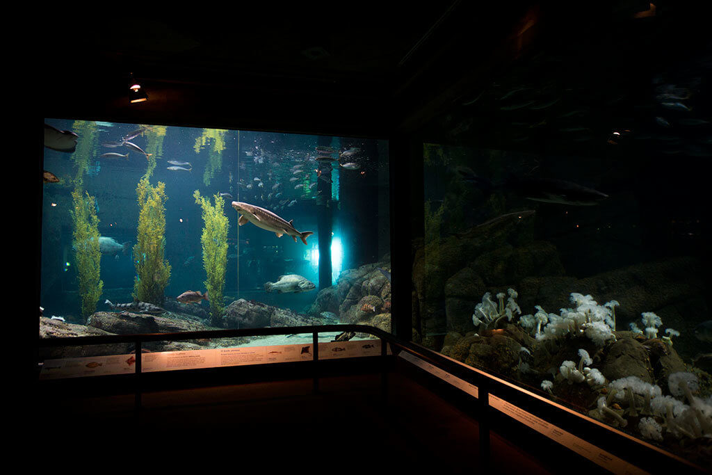 drive-swim-fly-monterey-bay-aquarium-california-monterey-peninsula-shark-tanks