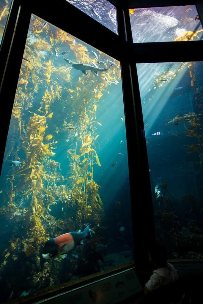 drive-swim-fly-monterey-bay-aquarium-california-monterey-peninsula-under-the-sea-orange-fish-shadows