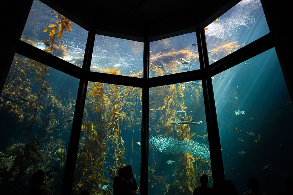 drive-swim-fly-monterey-bay-aquarium-california-monterey-peninsula-under-the-sea