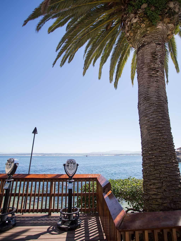 drive-swim-fly-monterey-bay-aquarium-california-monterey-peninsula-palm-tree