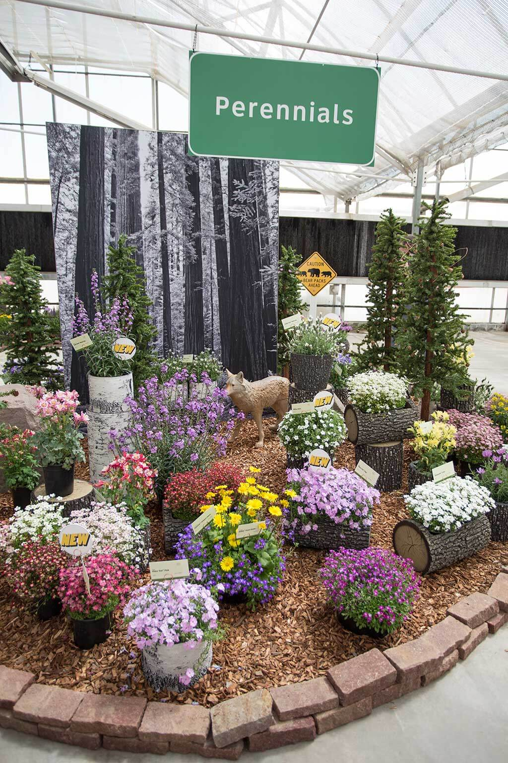 drive-swim-fly-california-spring-trials-gilroy-perennials-coyote