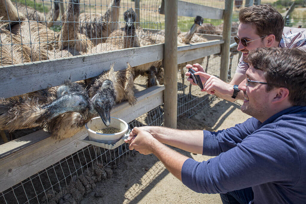 drive-swim-fly-solvang-california-ostrich-land-brandon-feeding-emus