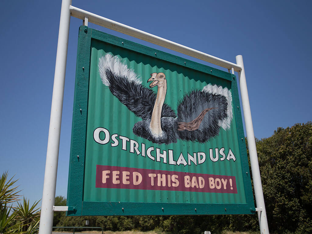 drive-swim-fly-solvang-california-ostrich-land-feed-this-bad-boy-sign