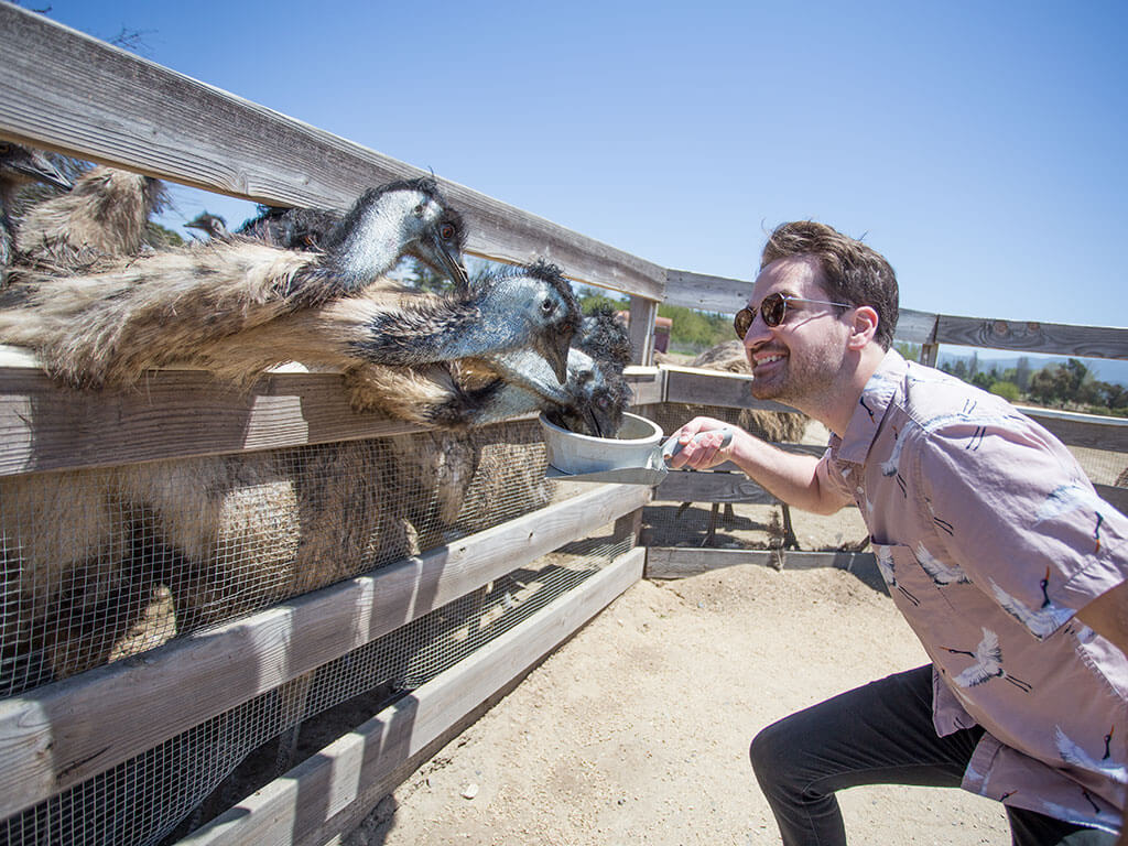 drive-swim-fly-solvang-california-ostrich-land-josh-feeding-emus