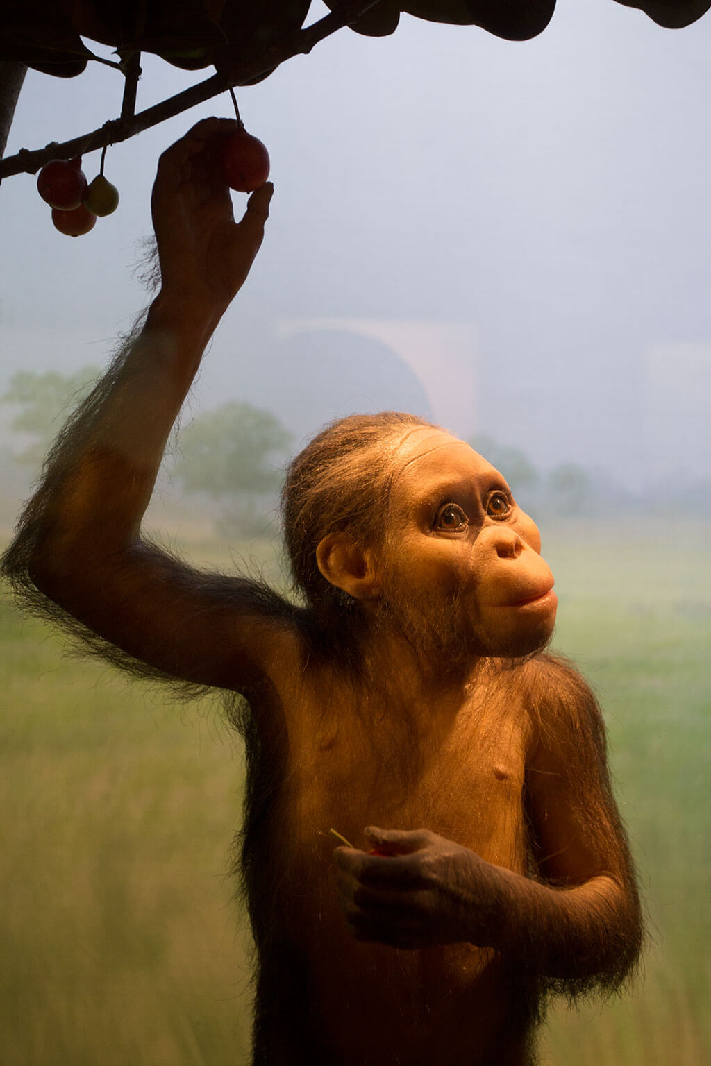 drive-swim-fly-california-academy-of-sciences-san-francisco-nitelife-adult-museum-night-tusher-african-hall-selam-monkey