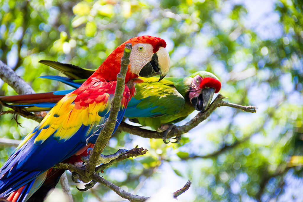 drive-swim-fly-guatemala-central-america-el-faro-antigua-missions-trip-documentary-maukaw-parrots