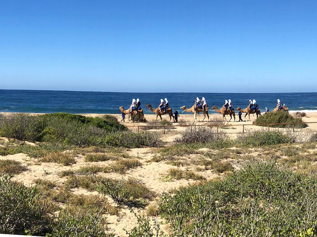 drive-swim-fly-mexican-riviera-cruise-los-angeles-mazatlan-cabo-san-lucas-puerto-vallarta-norwegian-cruise-lines-mexico-electric-bikes-beach-desert-camel-ride