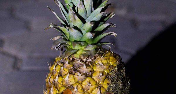 drive-swim-fly-pineapple-collection-jack-o-lantern-night