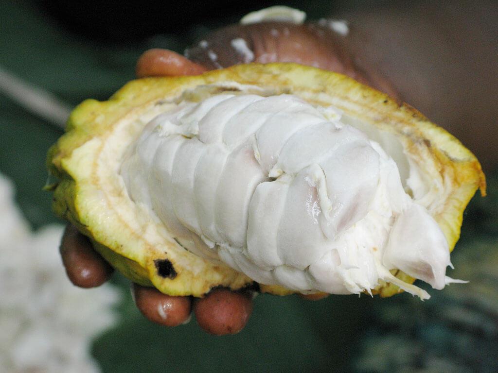 drive-swim-fly-hawaii-big-island-farm-tour-kokoleka-lani-farms-cocoa-pods-cacao-photo-by-david-greenwood-haigh-pixabay