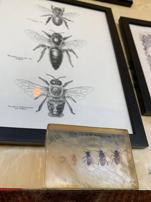 drive-swim-fly-hawaii-big-island-kona-coast-kealakekua-big-island-bees-honey-life-cycle