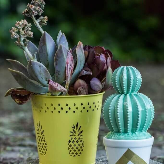 drive-swim-fly-california-pineapple-collection-succulent-pineapple-yellow-pot-fake-cactus