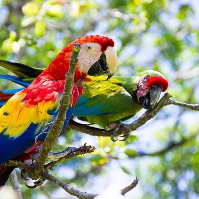 drive-swim-fly-guatemala-central-america-el-faro-antigua-missions-trip-documentary-maukaw-parrots